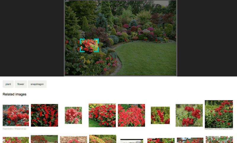 bing-visual-search-800x482